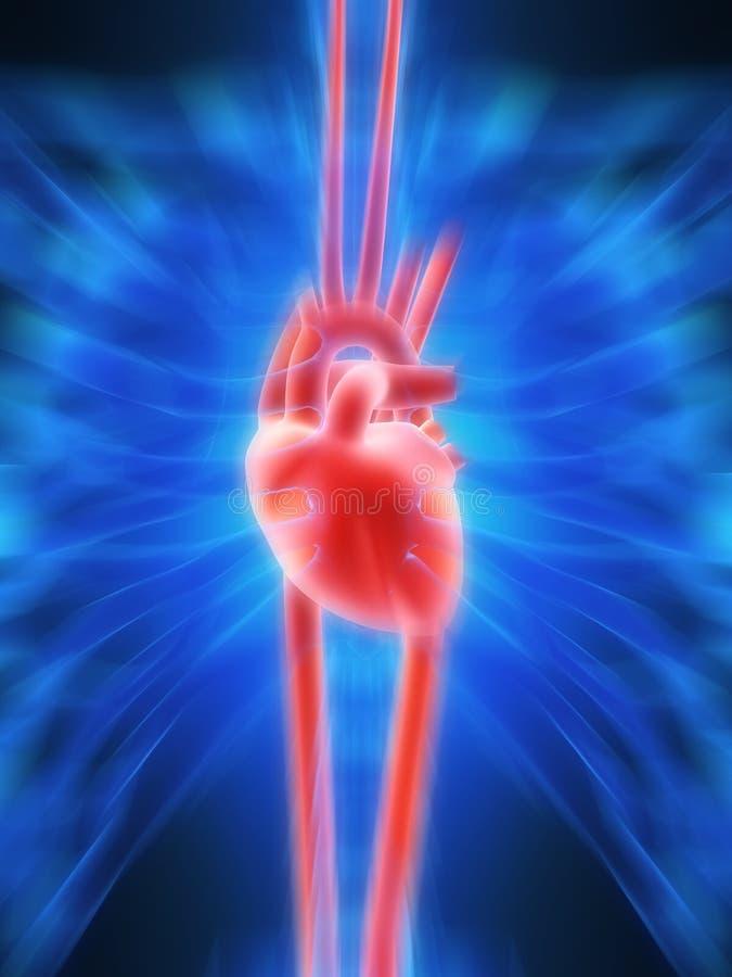 Pulsação do coração humana ilustração royalty free