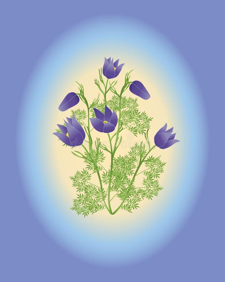 Pulsatilla do Anemone vulgaris ilustração royalty free