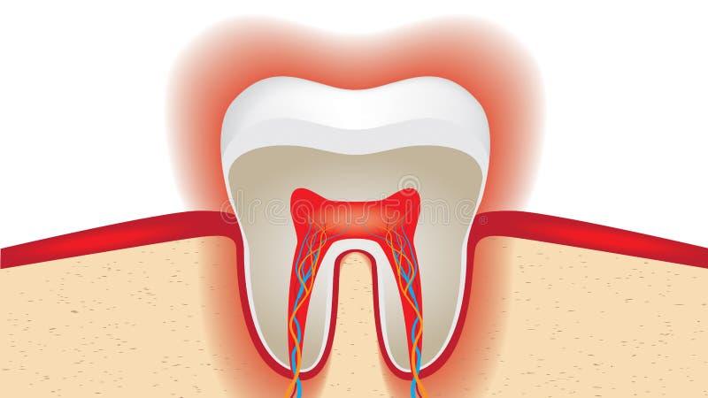 Pulsation d'émail des dents sensible illustration libre de droits