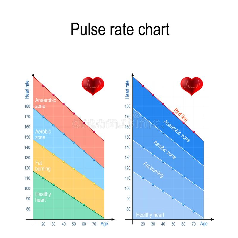 Pulse rate chart for healthy lifestyle. Maximum heart rate stock illustration