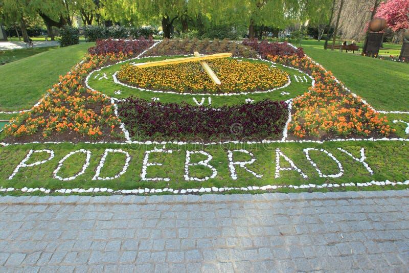 Pulso de disparo da flor em Podebrady fotografia de stock