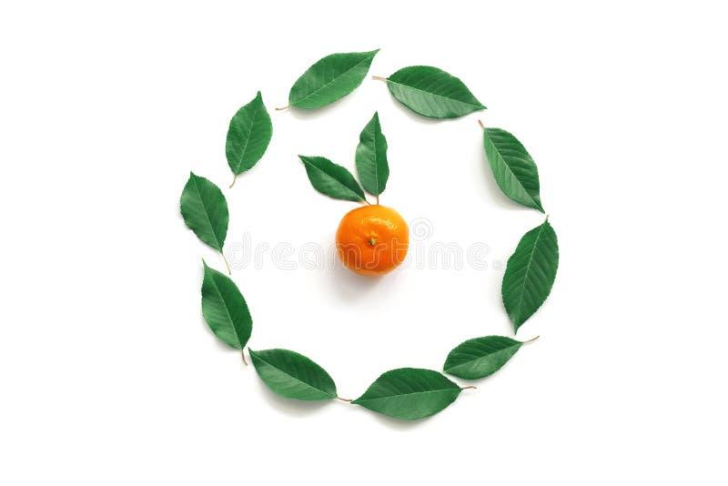 Pulso de disparo das tangerinas e das folhas, cinco minutos ao ano novo em um fundo branco O conceito de ano novo, disposição cri foto de stock