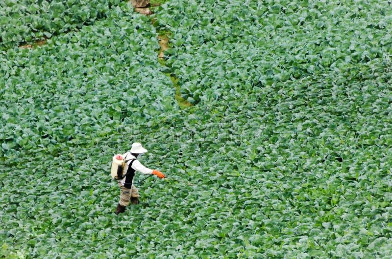 Pulvérisation d'agriculteurs photographie stock