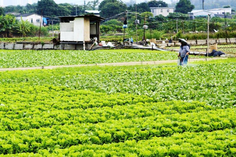 Pulverização cultivada da terra e do fazendeiro imagem de stock royalty free