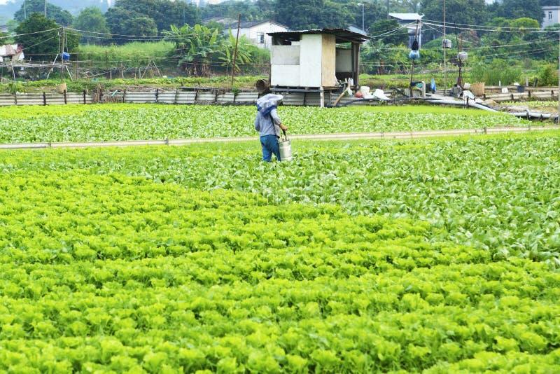 Pulverização cultivada da terra e do fazendeiro fotos de stock royalty free