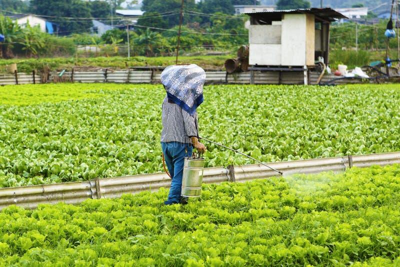 Pulverização cultivada da terra e do fazendeiro imagem de stock