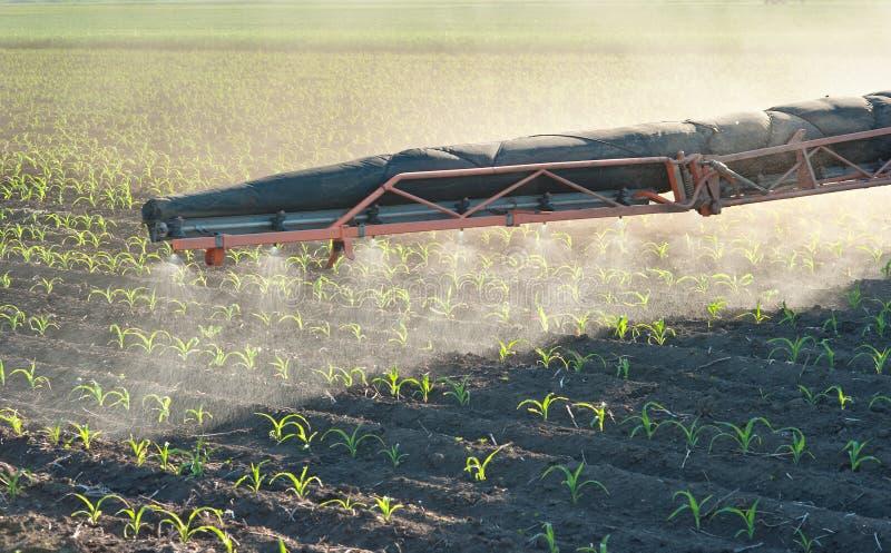 Pulverização dos herbicidas fotografia de stock royalty free