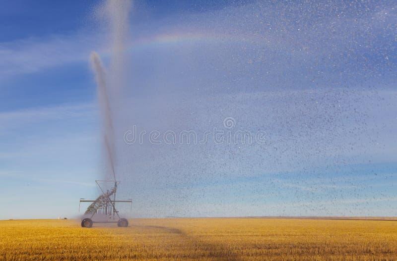 Pulverizador da irrigação fotos de stock