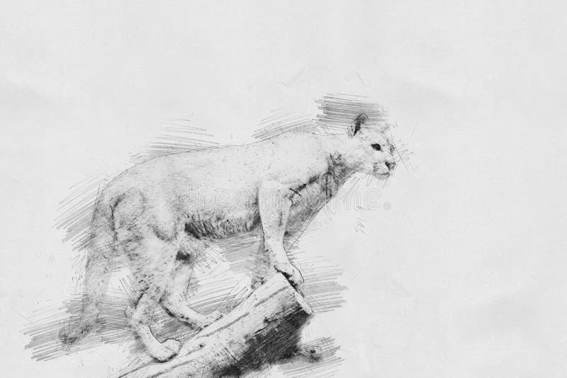 puma Bosquejo con el lápiz ilustración del vector