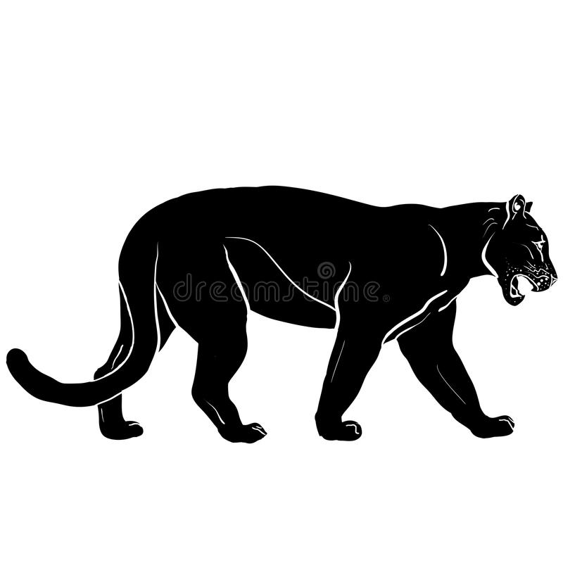 Puma mit den enormen Stoßzähnen stockbild