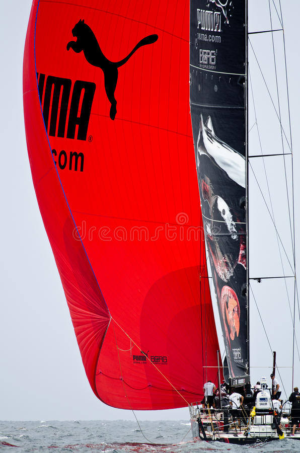 Puma under spinnaker royalty free stock images