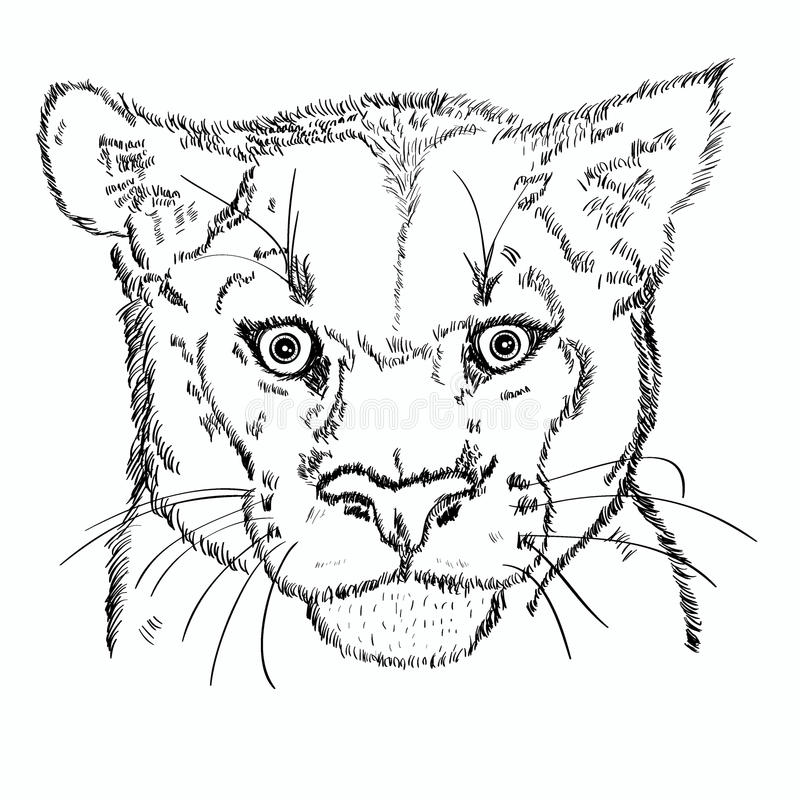 Pumahauptskizze vektor abbildung