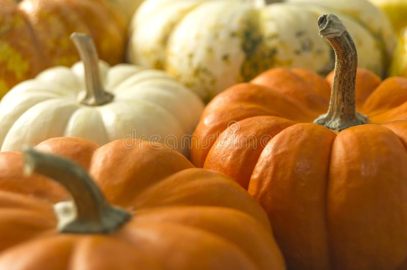 6 305 Pumkin Photos Free Royalty Free Stock Photos From Dreamstime A pumpkin is a large, orange, fruit. free royalty free stock photos from