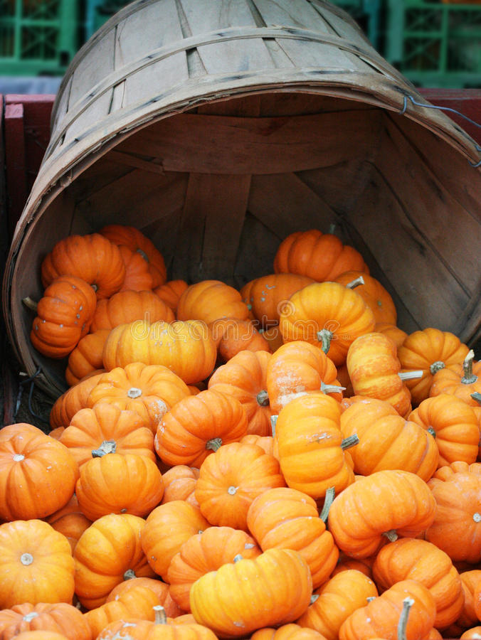 Free Pumkin Halloween Thanksgiving Stock Photos - 27336513