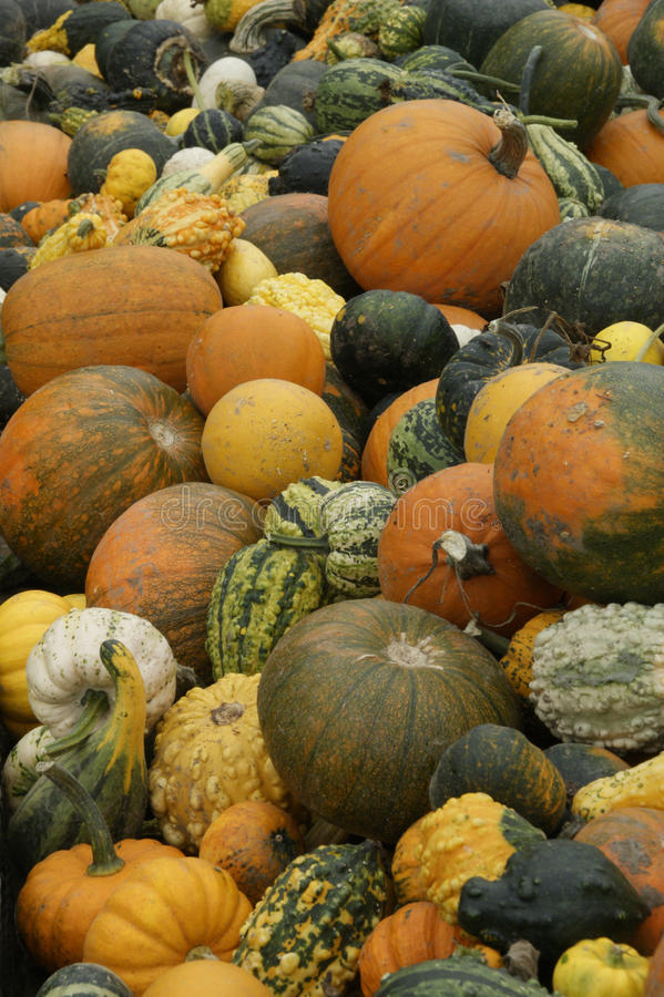 Pumkins & Gourds foto de stock royalty free