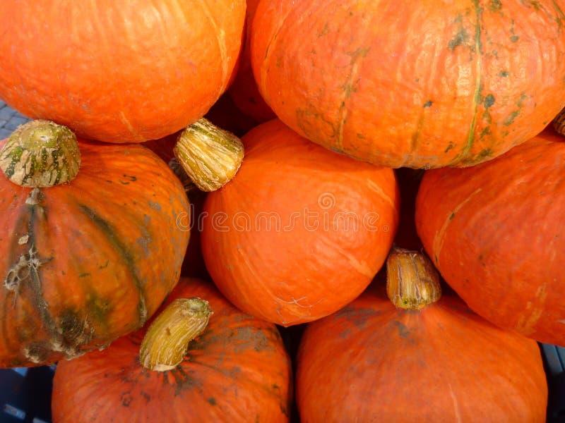 Pumkins anaranjados de una cosecha del otoño imagen de archivo libre de regalías
