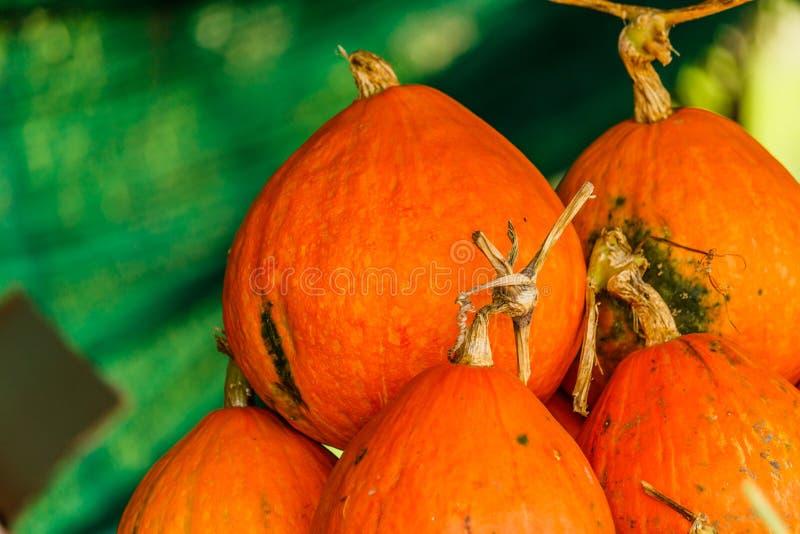 Pumkins anaranjados grandes de una cosecha del otoño imágenes de archivo libres de regalías