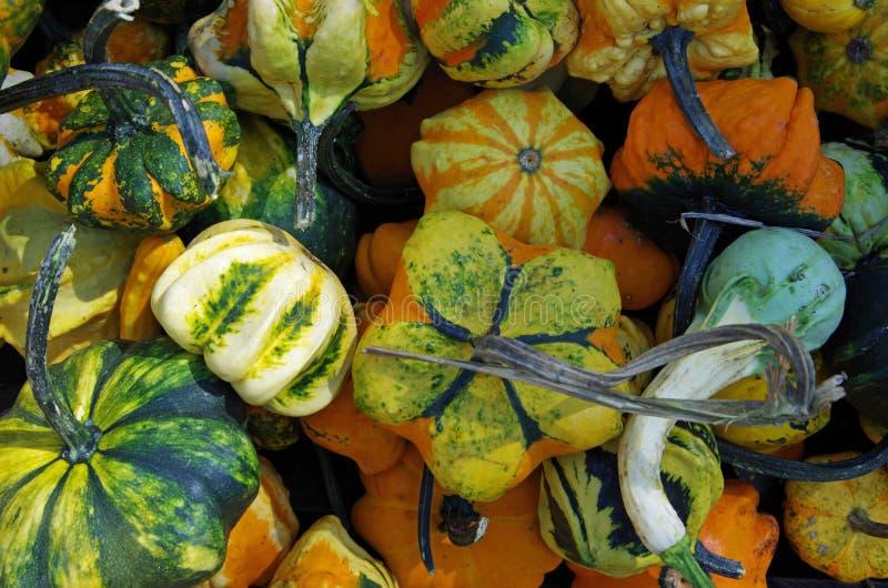 Pumkins y calabazas del otoño fotos de archivo libres de regalías