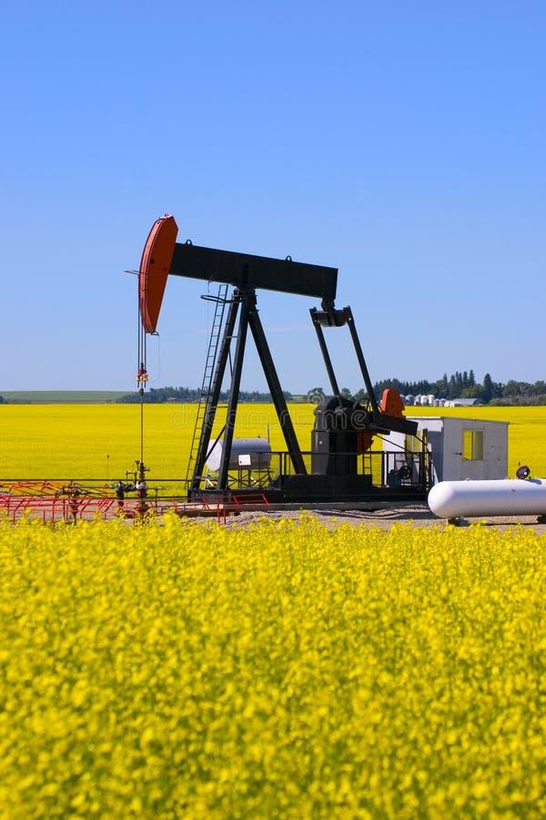Pump jack in canola field stock photo