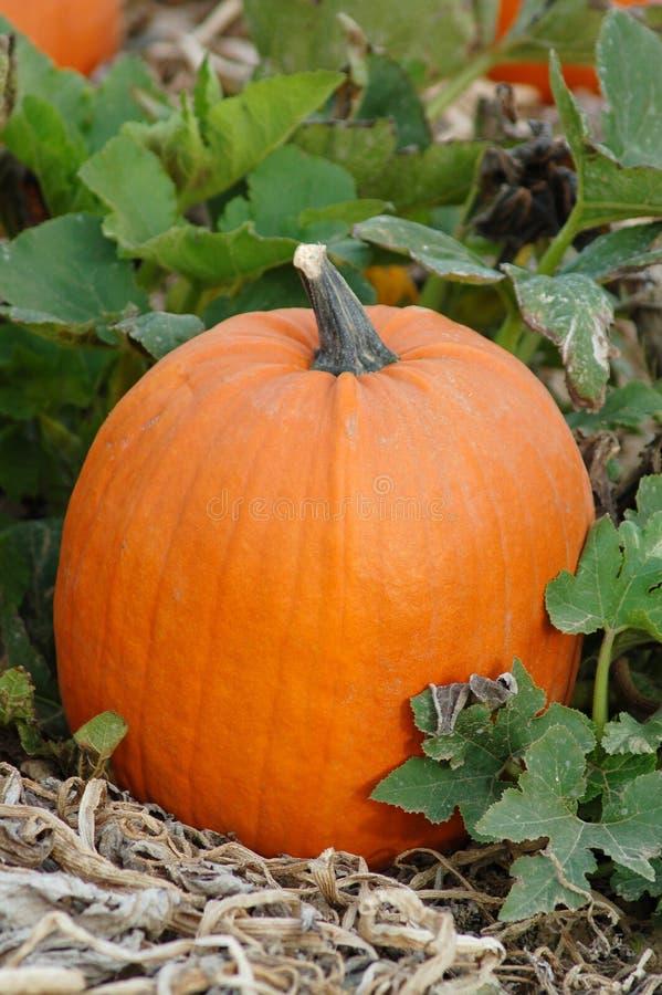Download Pumpa arkivfoto. Bild av pumpa, oktober, lapp, stålar, lykta - 281616