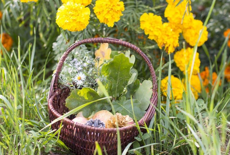 Pumpa för apelsin för korg för fruktsommarbrunt royaltyfri foto