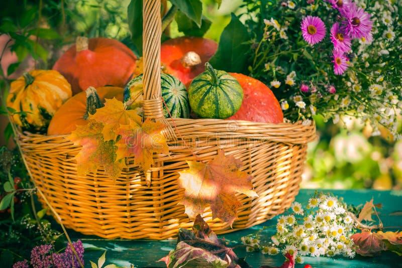 Pumpa för trädgården för skörden för nedgångkorghösten bär frukt den färgrika blomman royaltyfria foton