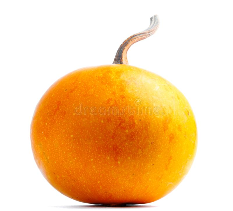 Pumpa p? isolerad vit bakgrund Nytt apelsin arkivfoton