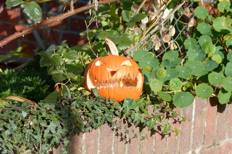Pumpa sned in i den läskiga framsidan för halloween på väggen royaltyfri fotografi