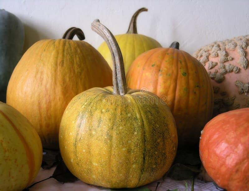 Download Pumpatabell fotografering för bildbyråer. Bild av halloween - 998819