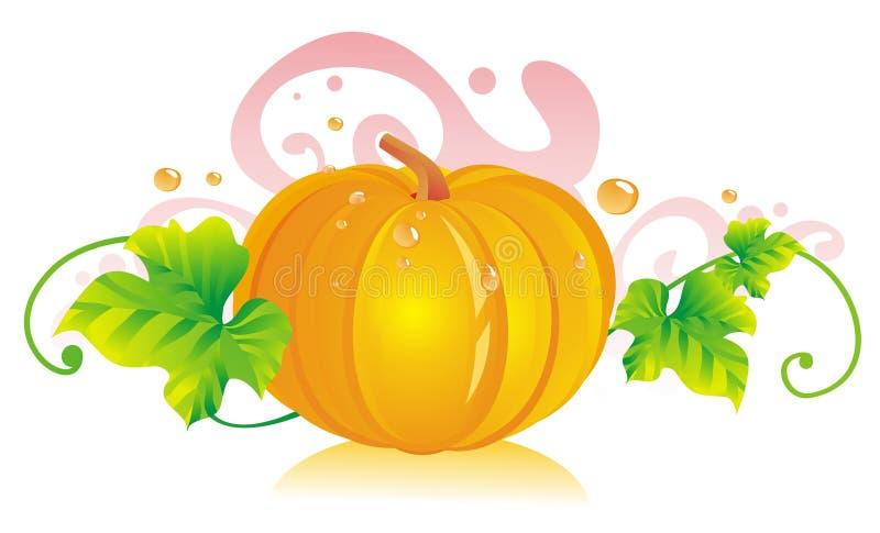 Pumpkin. Paunchy pumpkin with pumpkin leaves stock illustration