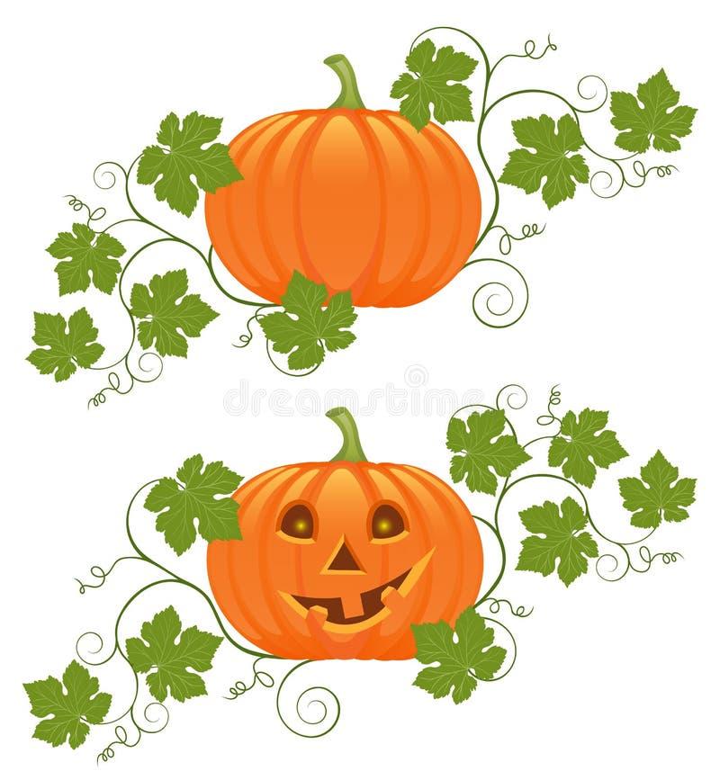 Download Pumpkin stock illustration. Image of plant, fall, vintage - 15623935