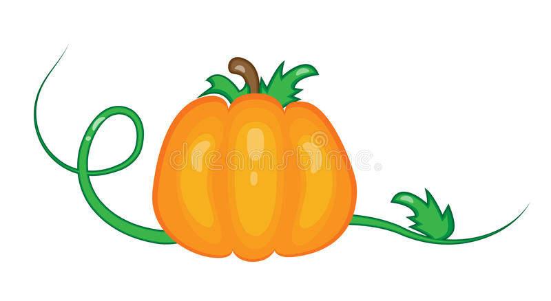 Pumpkin. Ripe pumpkin with leaves isolated on the white royalty free illustration