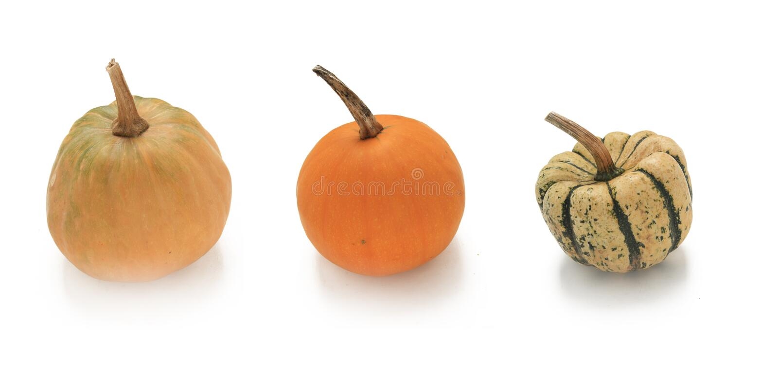Download Pumpkin stock image. Image of images, food, choice, decoration - 16426185