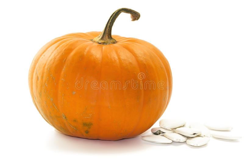 Pumpkin. The species Cucurbita pepo is a cultivated plant of the genus Cucurbita. It includes varieties of squash, gourd, and pumpkin. They are typically orange royalty free stock photos