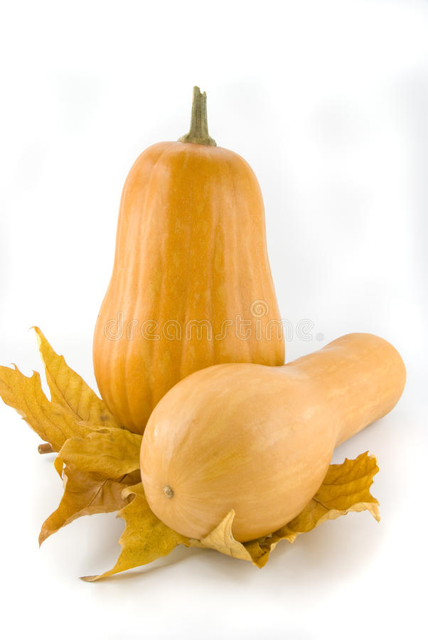 Free Pumpkin Stock Photography - 16897172