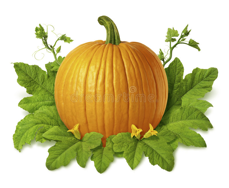 Pumpkin. Isolated on a white background. Isolation is on a transparent layer in the PNG format stock photography
