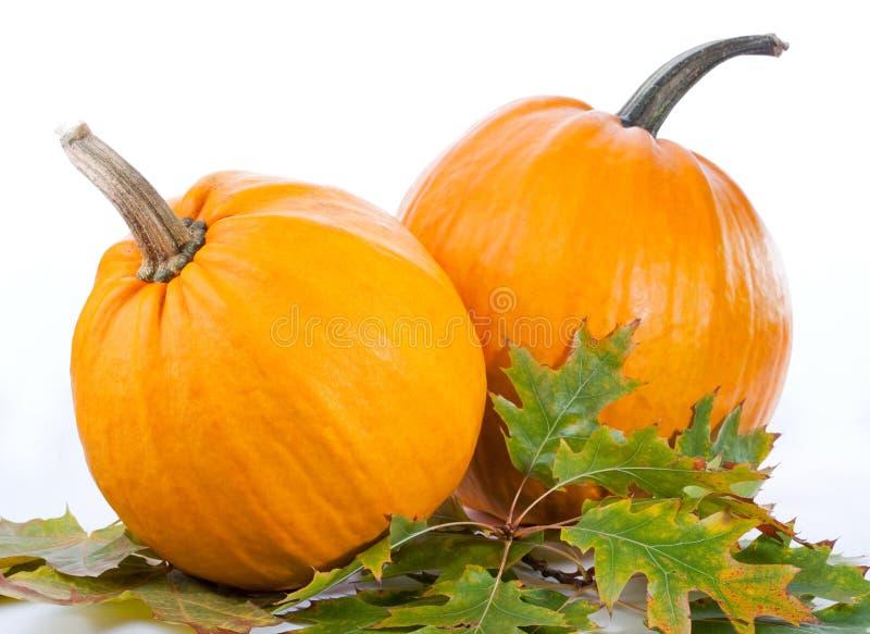 Pumpkin royalty free stock photo