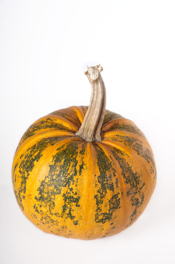 Download Pumpkin stock image. Image of color, vertical, colour - 21940233