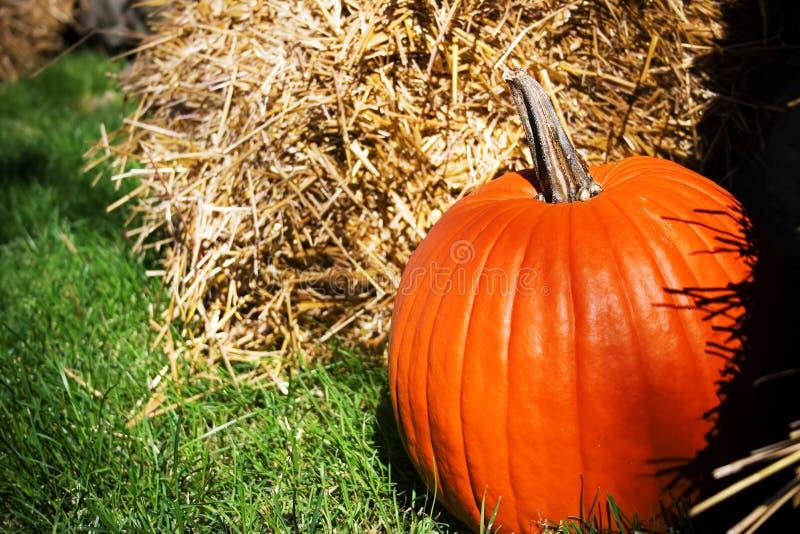 Pumpkin Free Stock Photography