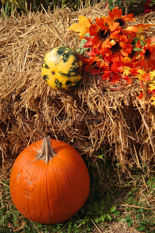 Download Pumpkin 6 Royalty Free Stock Photo - Image: 561325