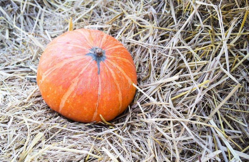 Pumpkin3 royaltyfria bilder