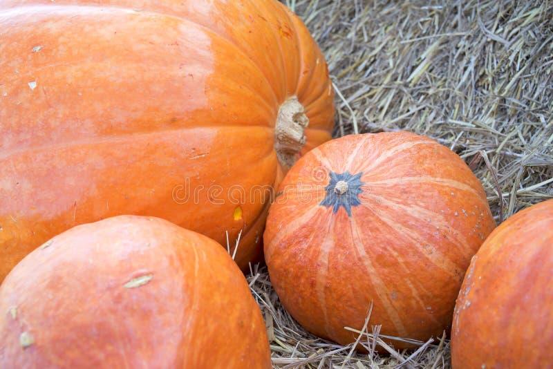 Pumpkin7 royaltyfri fotografi