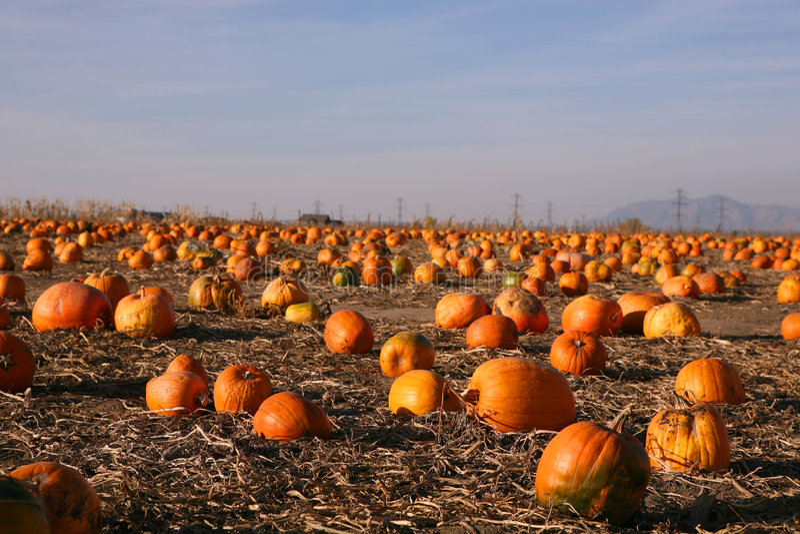 Download Pumpkin stock image. Image of autumn, fall, november, produce - 6859981
