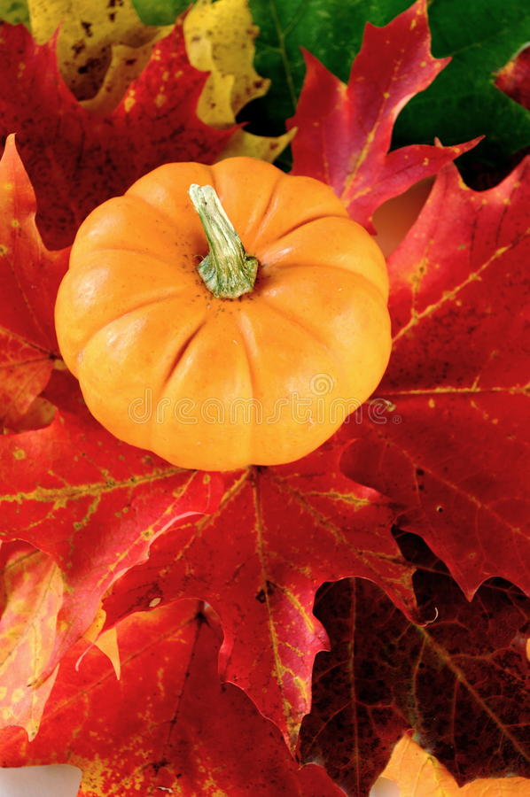 Free Pumpkin And Maple Leaves Stock Photo - 11138790