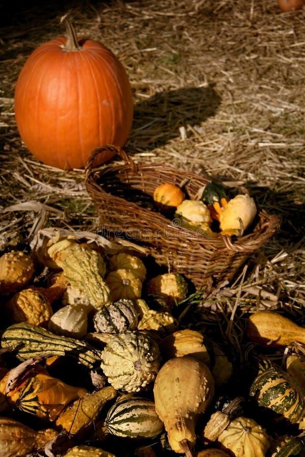 Pumpkin arrangement. Harvest of many pumpkins and gourds in autumn stock photo