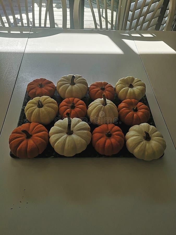 Pumpkin Autumn Fall Season Seasonal Linda foto de stock