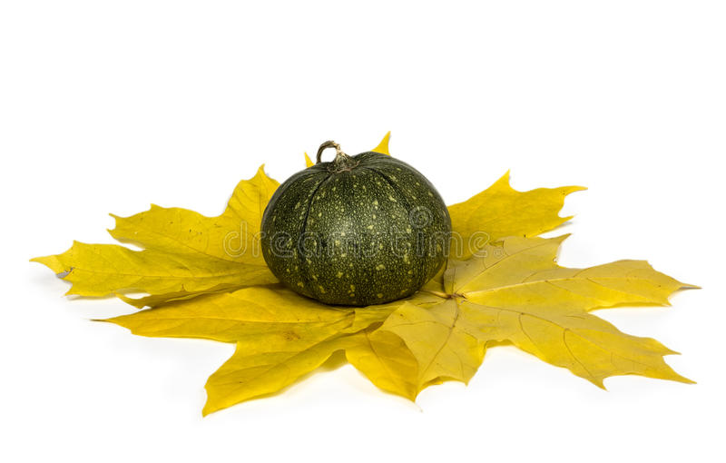Pumpkin with autumn leaves. Pumpkin with autumn maple leaves on a white background. Close-up. Copy space. Autumn theme royalty free stock images