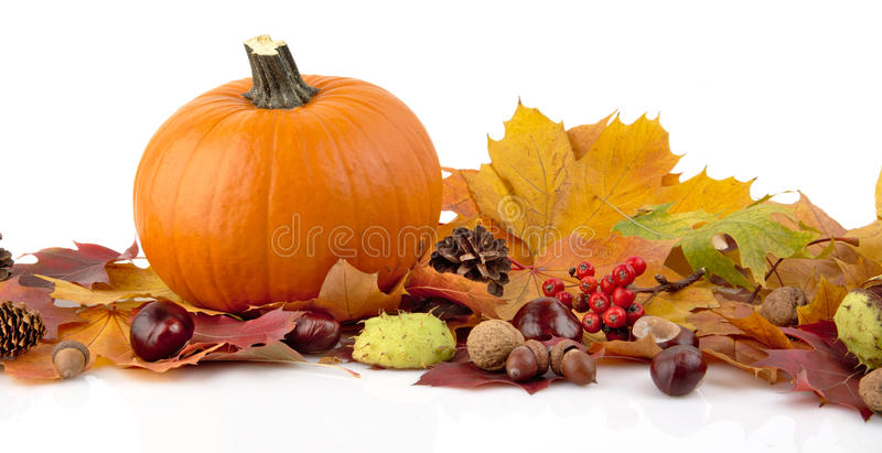 Pumpkin with autumn leaves for thanksgiving day on white background royalty free stock photo