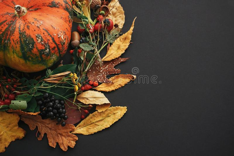 Pumpkin in autumn wreath of fall leaves, red berries, acorns, anise, nuts, autumn flowers on black paper background. Copy space. stock image