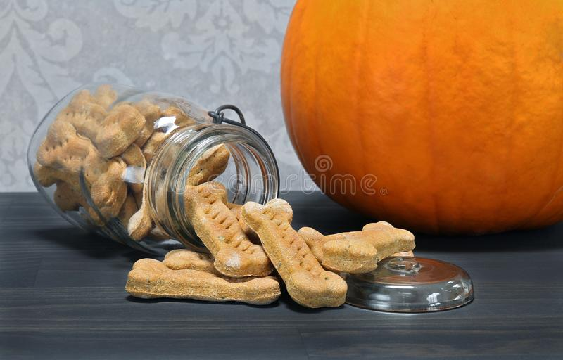 Pumpkin bone shaped dog cookies spilling onto a counter. royalty free stock images